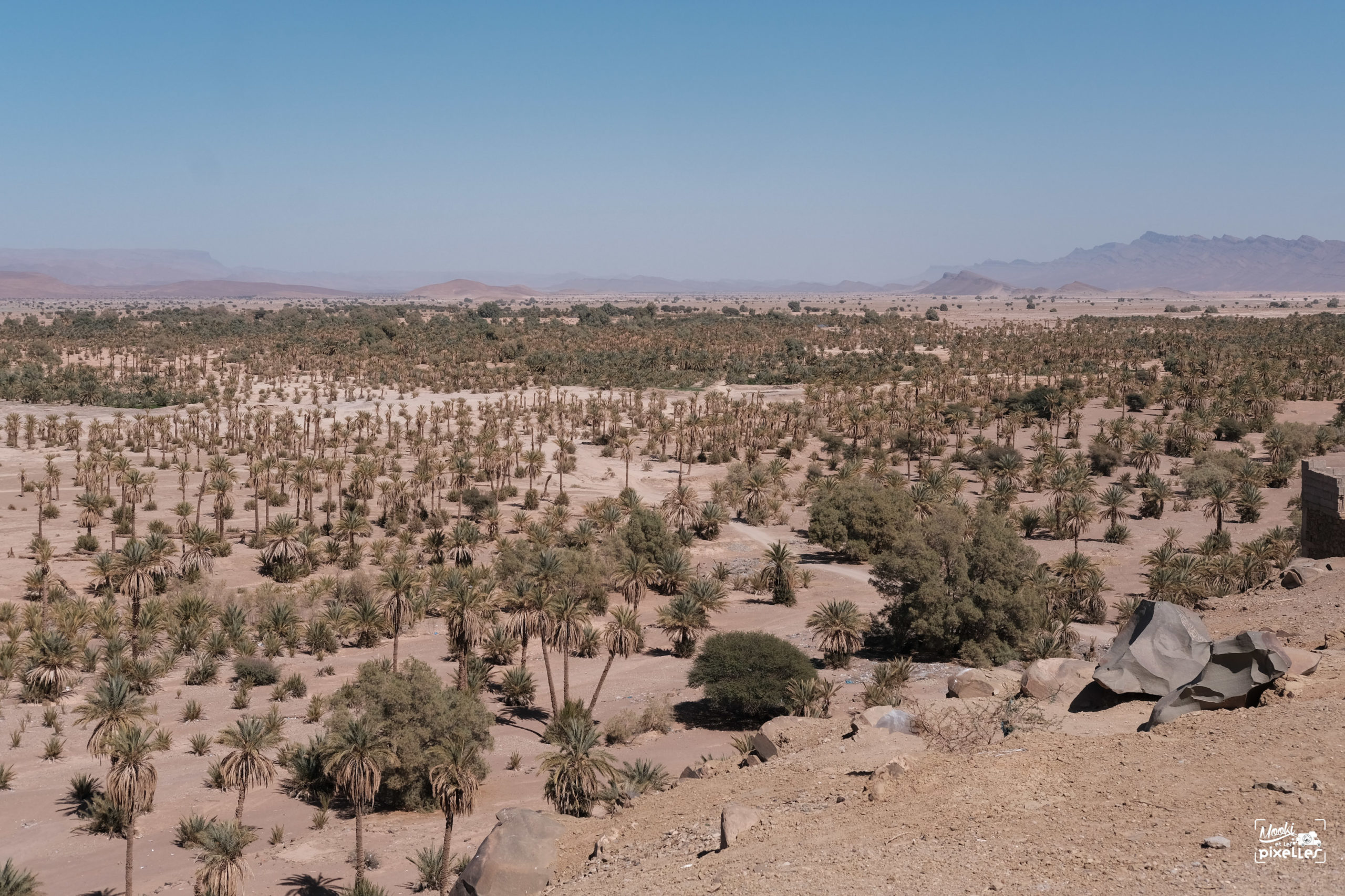 Vue au dessus d'une palmeraie au Maroc