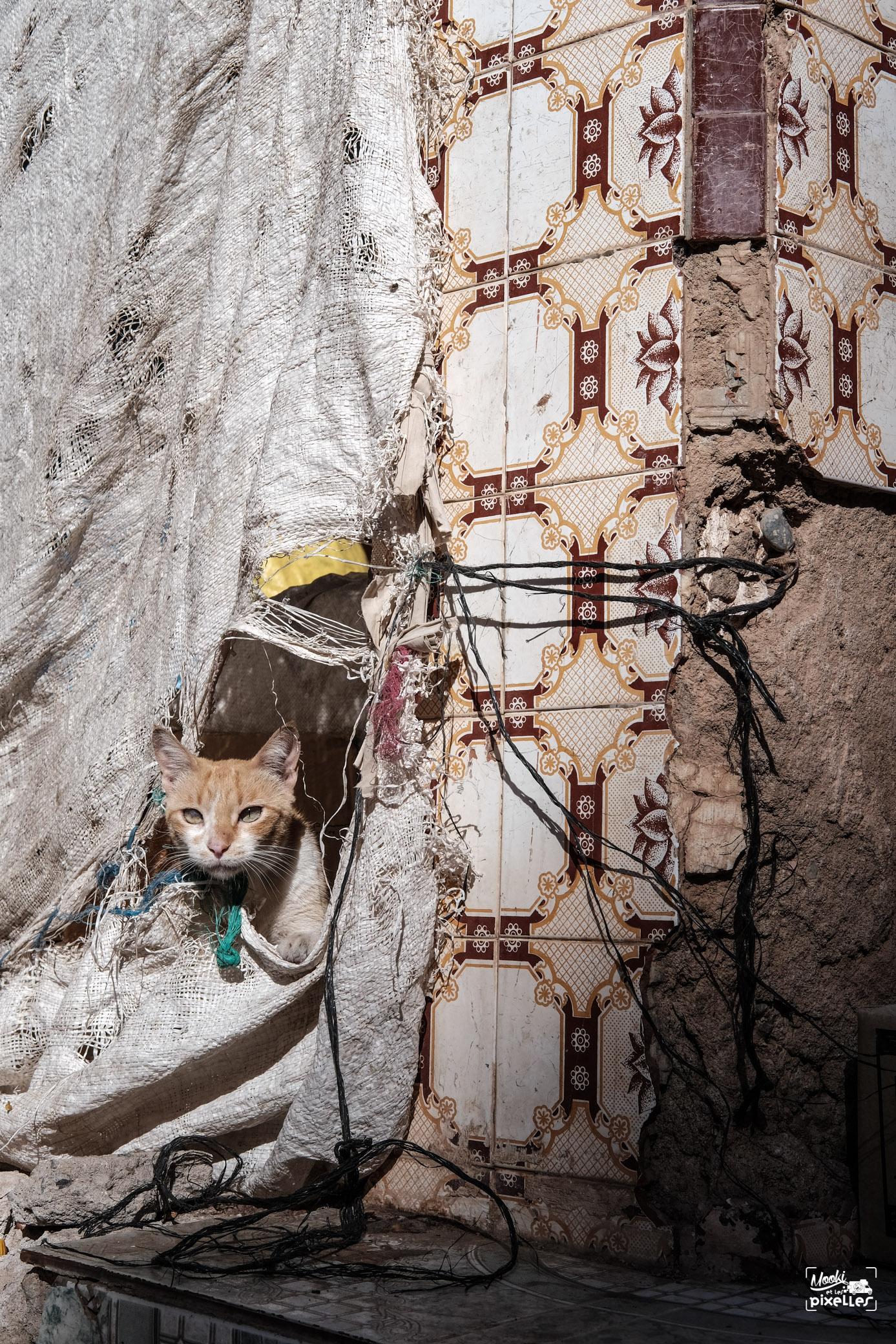 Un chat dans les rues de Tata au Maroc