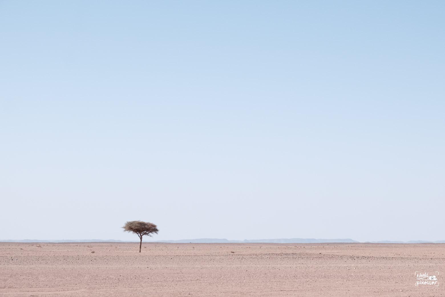 l'arbre solitaire au milieu du désert au Maroc