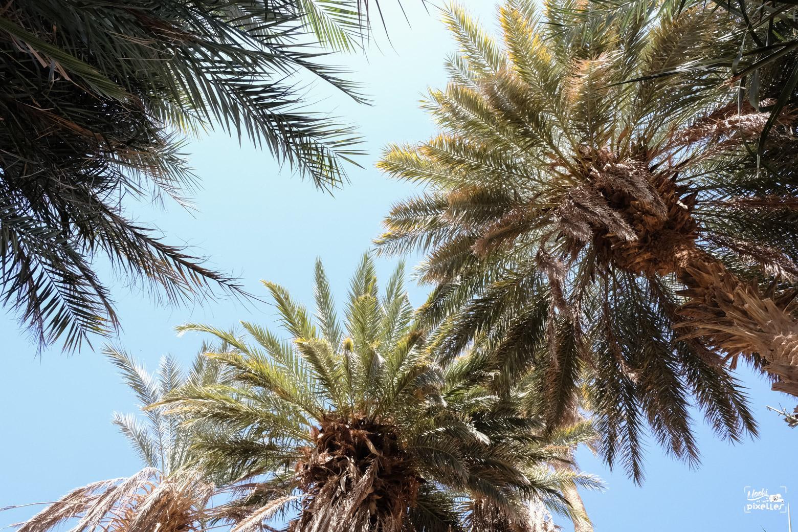 Palmiers au milieu d'une oasis dans le désert