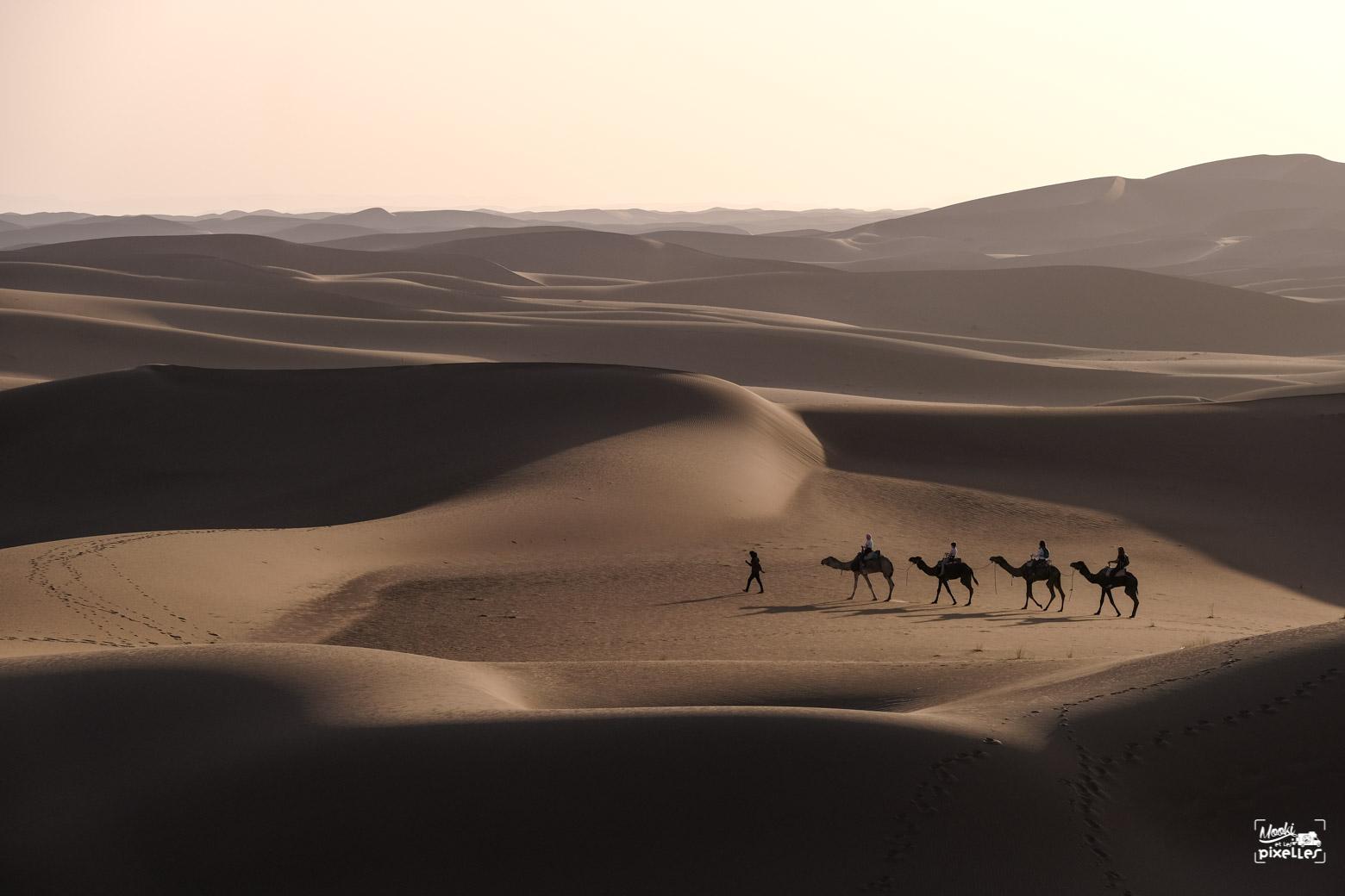 Caravane de dromadaires au milieu du désert