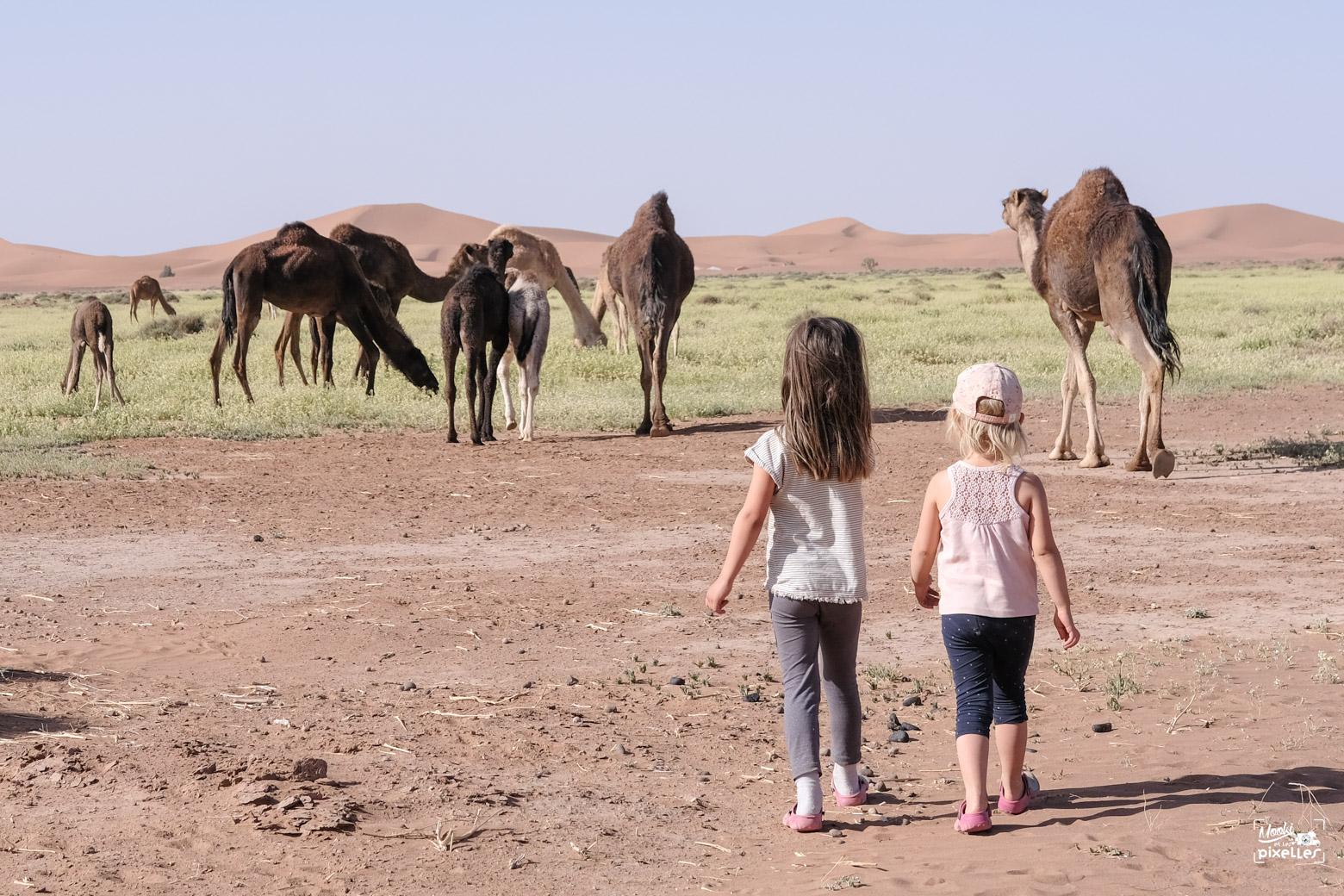 Les filles et les dromadaires du Sahara
