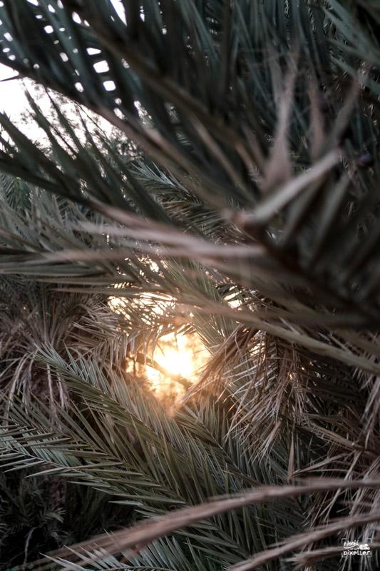 Rayon de soleil à travers les palmiers au Maroc