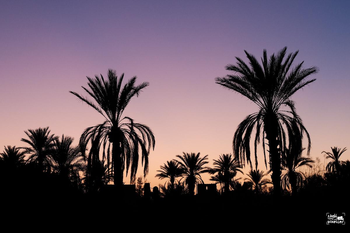 Coucher de soleil sur les palmiers au Maroc