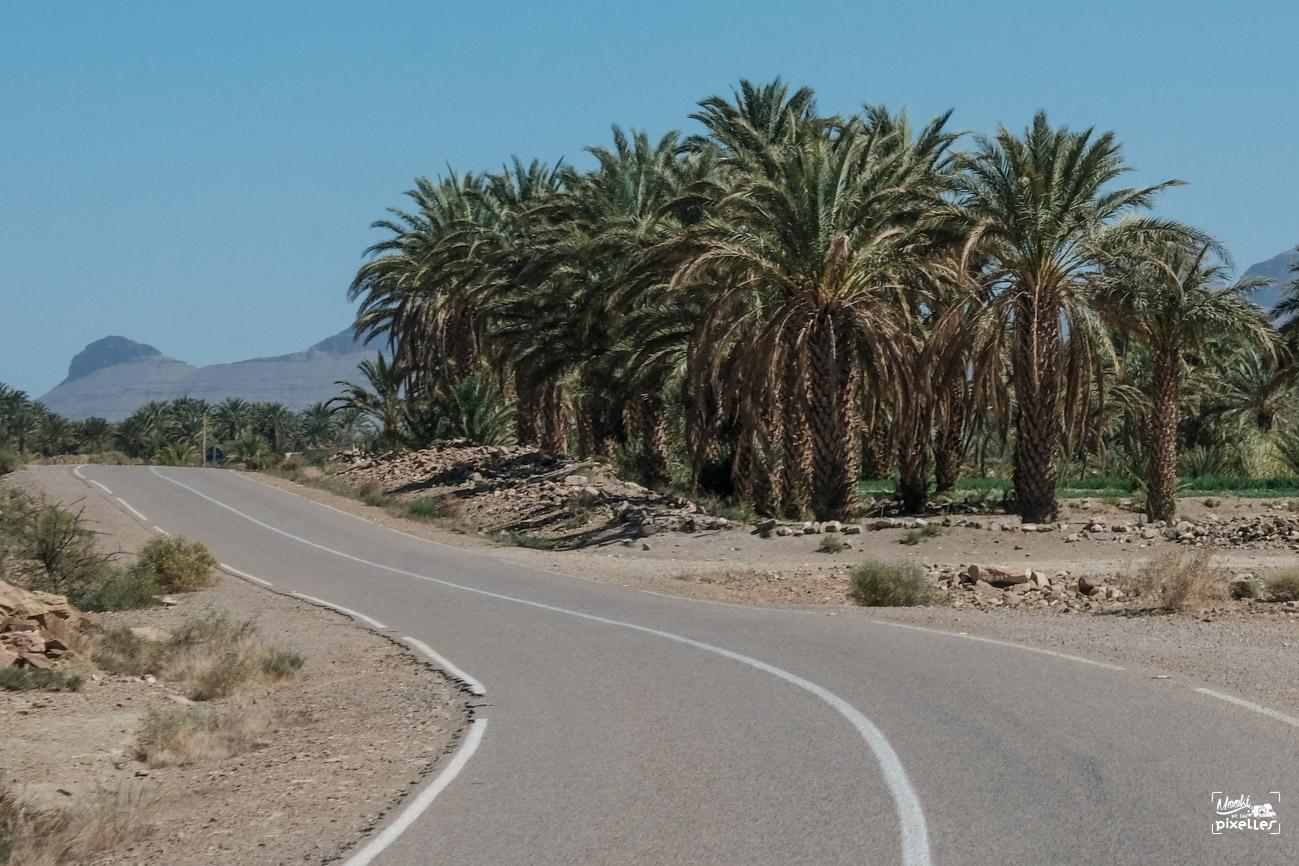 Palmiers au bord de la route au maroc