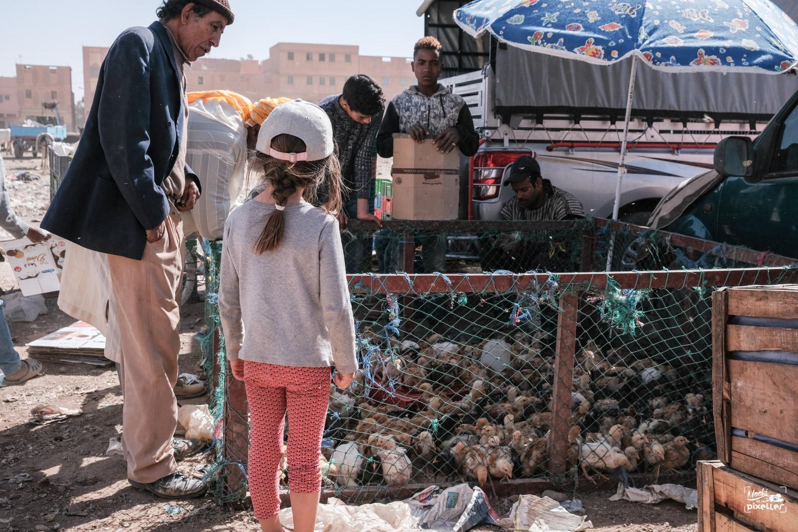 Une enfant regarde un marchand de poussins