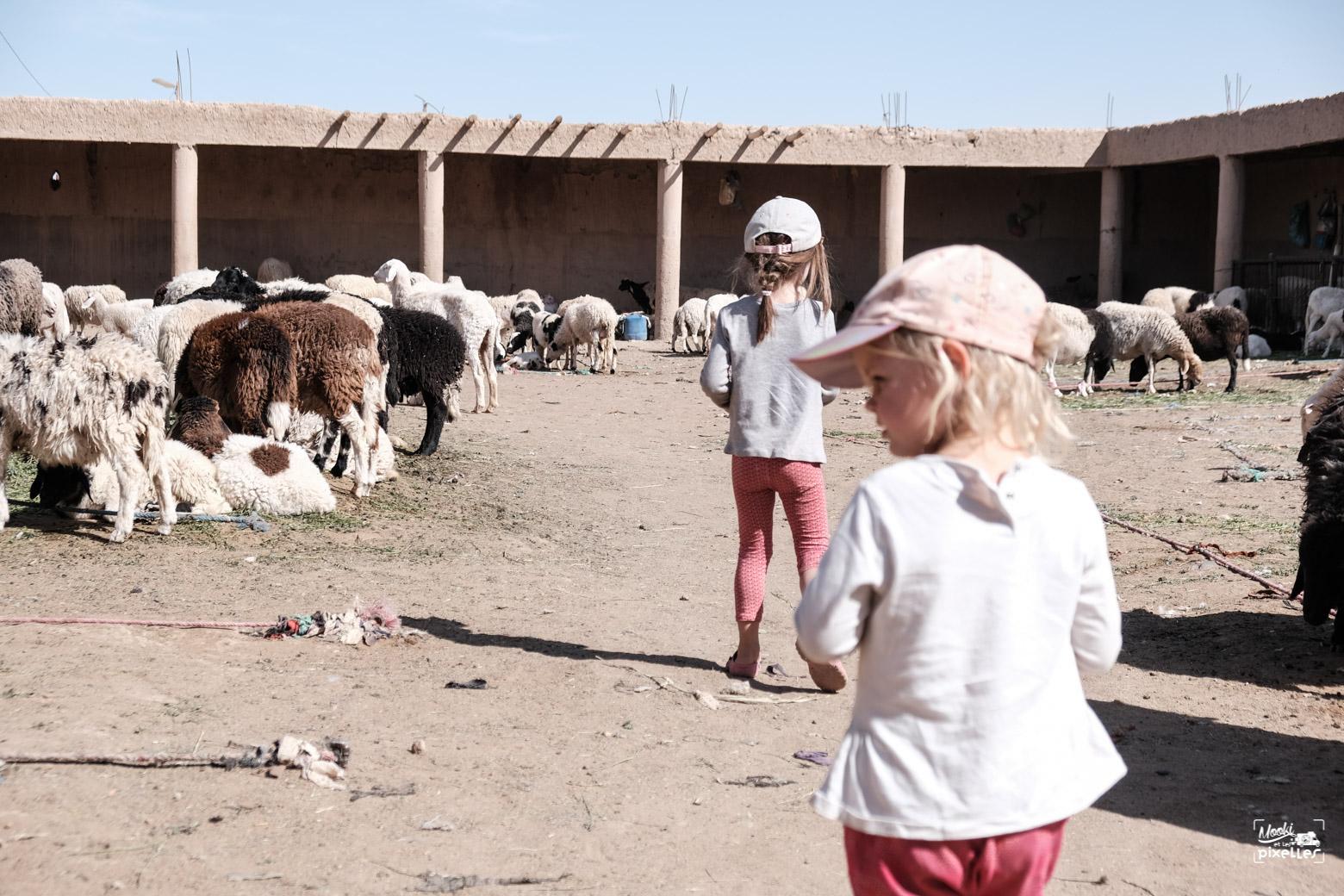 Les filles se retrouvent dans l'endroit des ventes de mouton